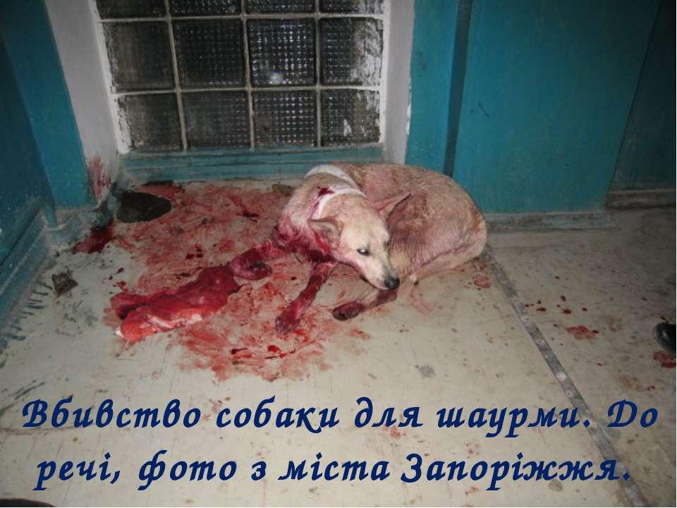 Вбивство собаки для шаурми. До речі, фото з міста Запоріжжя.