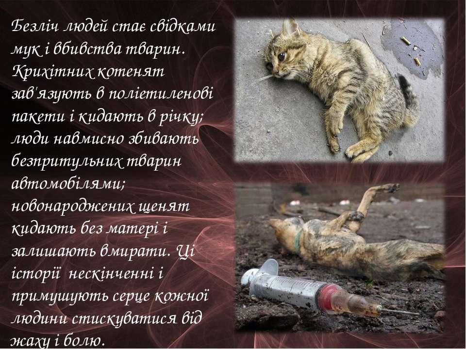 Безліч людей стає свідками мук і вбивства тварин. Крихітних котенят зав'язуют...
