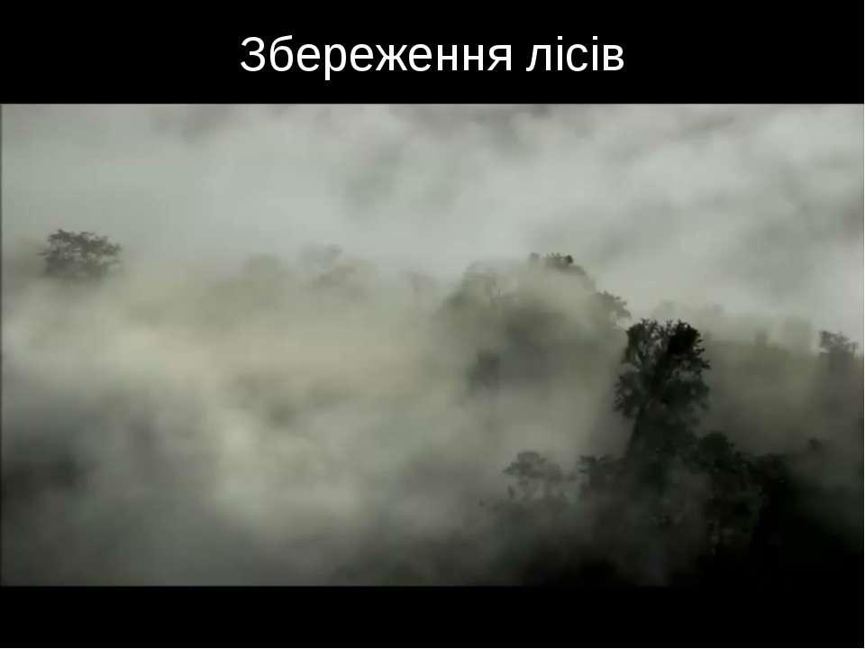 Збереження лісів