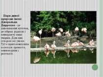 Парк дикої природи імені Джеральда Даррелла - це дивовижний куточок, де зібра...