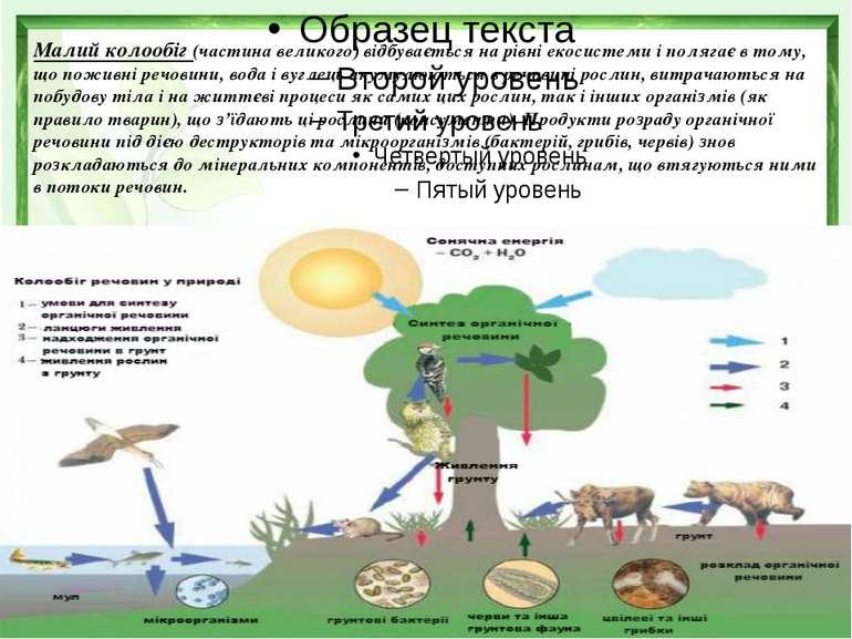 . Малий колообіг(частина великого) відбувається на рівні екосистеми і поля...