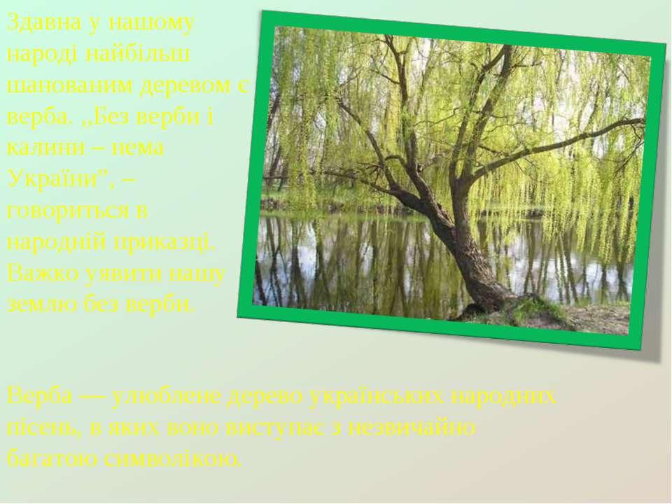 """Здавна у нашому народі найбільш шанованим деревом є верба. """"Без верби і калин..."""