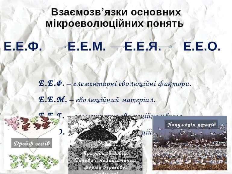 Взаємозв'язки основних мікроеволюційних понять Е.Е.Ф. Е.Е.М. Е.Е.Я. Е.Е.О. Е....