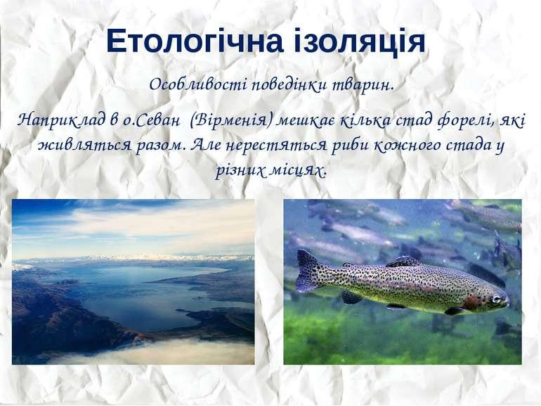 Етологічна ізоляція Особливості поведінки тварин. Наприклад в о.Севан (Вірмен...