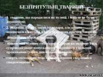 БЕЗПРИТУЛЬНІ ТВАРИНИ 1. тварини, що народилися на вулиці, і ніколи не були до...
