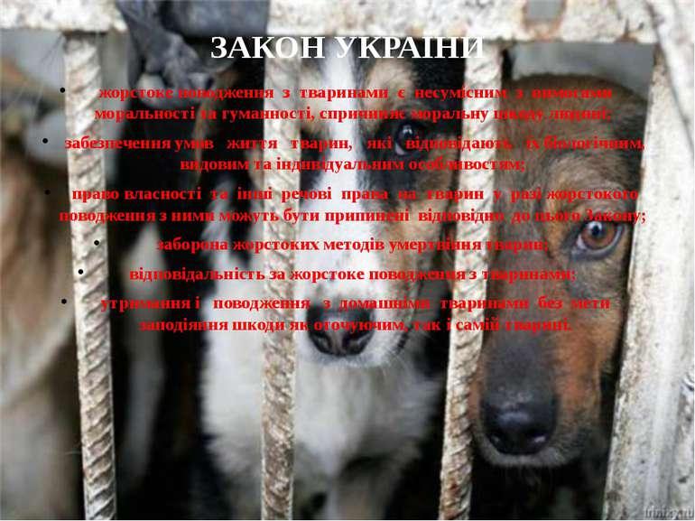 ЗАКОН УКРАЇНИ жорстоке поводження з тваринами є несумісним з вимогами моральн...