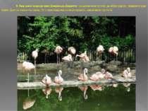 8. Парк дикої природи імені Джеральда Даррелла - це дивовижний куточок, де зі...