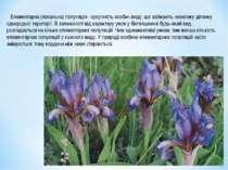 Елементарна (локальна) популяція - сукупність особин виду, що займають невели...