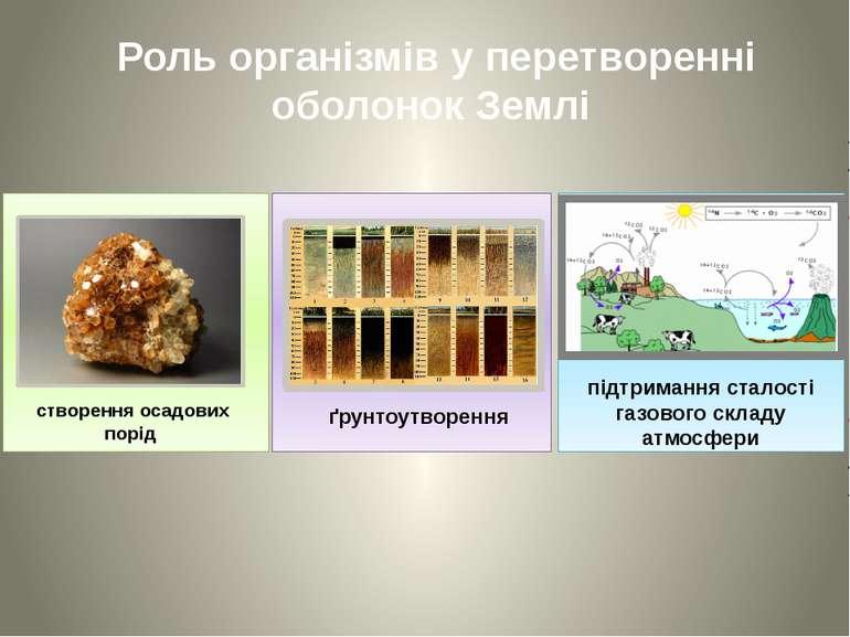 Роль організмів у перетворенні оболонок Землі створення осадових порід ґрунто...