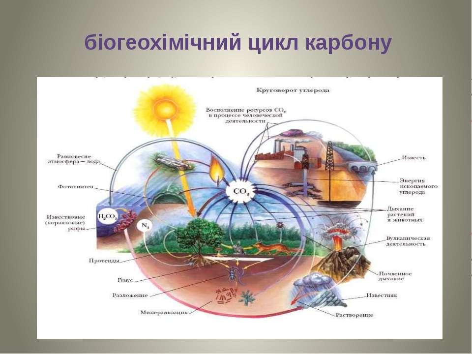 біогеохімічний цикл карбону