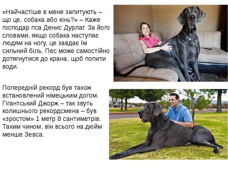 «Найчастіше в мене запитують – що це, собака або кінь?» – Каже господар пса Д...