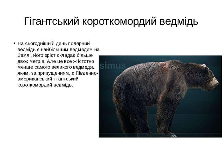 Гігантський короткомордий ведмідь На сьогоднішній день полярний ведмідь є най...