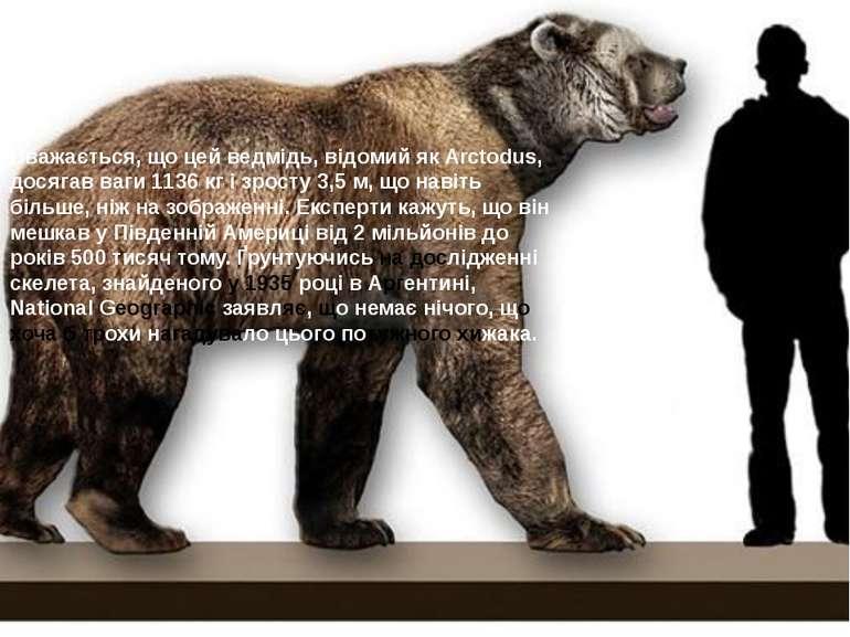 Вважається, що цей ведмідь, відомий як Arctodus, досягав ваги 1136 кг і зрост...