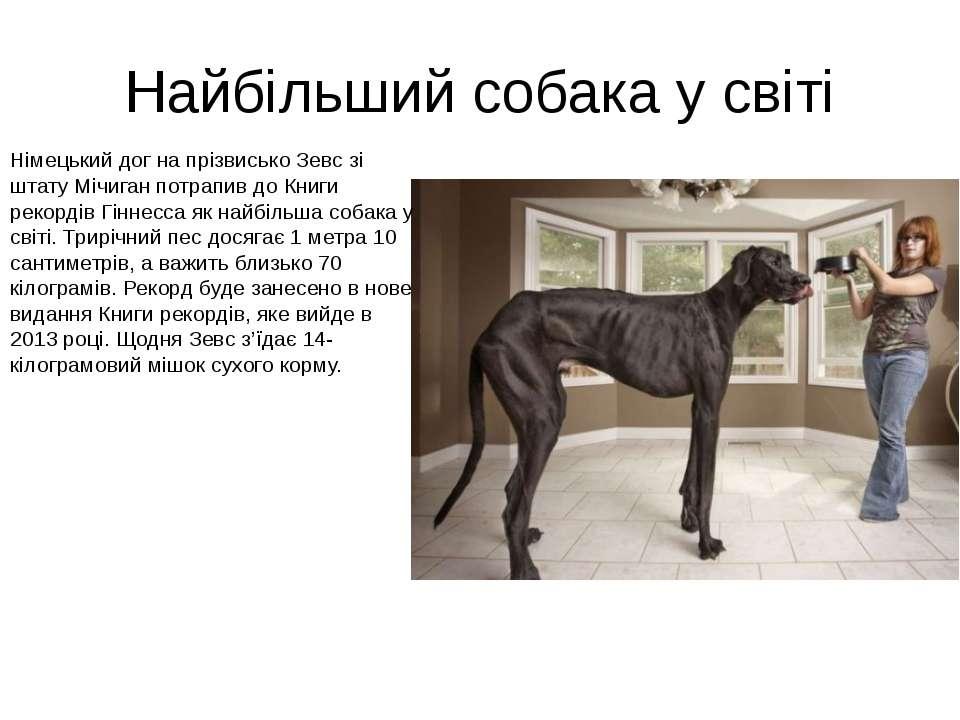 Найбільший собака у світі Німецький дог на прізвисько Зевс зі штату Мічиган п...