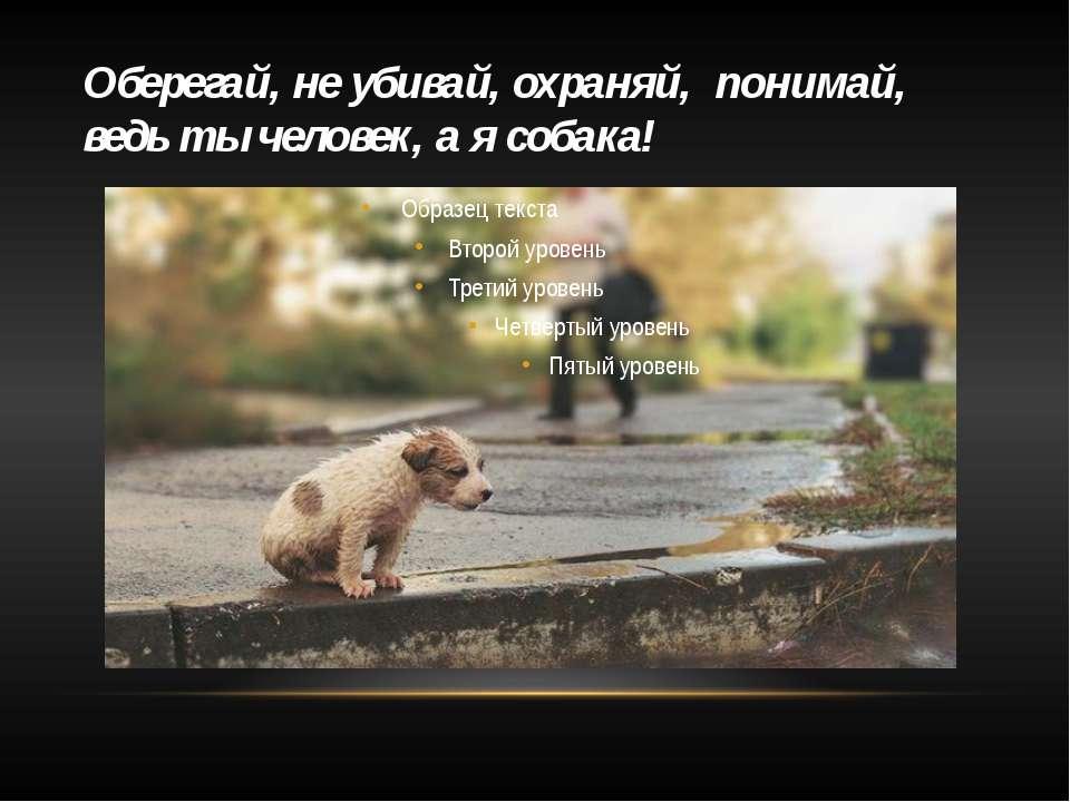 Оберегай, не убивай, охраняй, понимай, ведь ты человек, а я собака!