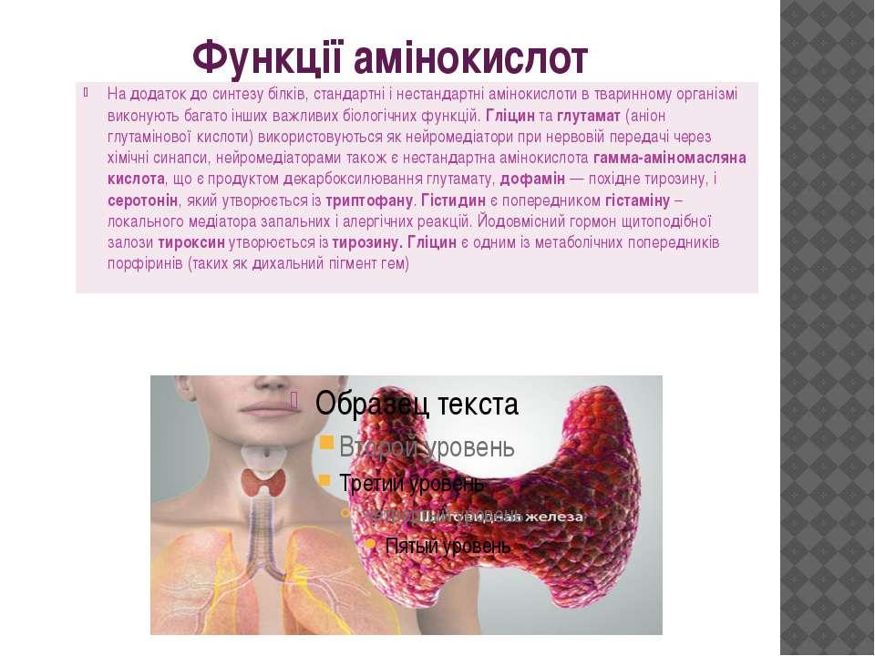 Функції амінокислот На додаток до синтезу білків, стандартні і нестандартні а...
