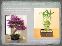 Квіти, рослини в горщиках і бамбук Рослини використовують для пожвавлення зон...