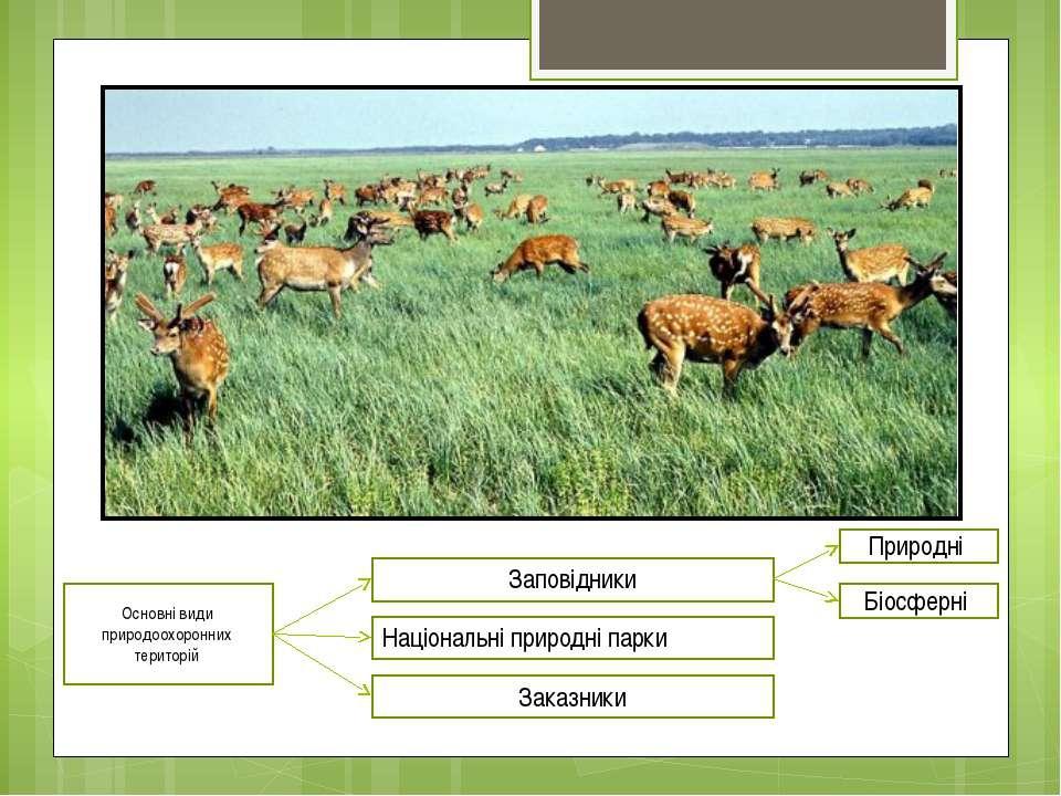 Основні види природоохоронних територій Заповідники Природні Біосферні Націон...