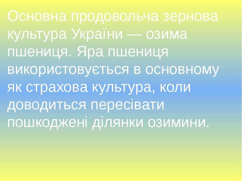 Основна продовольча зернова культура України — озима пшениця. Яра пшениця вик...