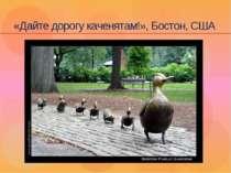 «Дайте дорогу каченятам!», Бостон, США