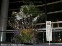 Гагантська екібана в японії