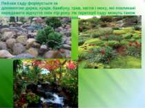 Пейзаж саду формується за допомогоюдереа,кущів,бамбуку,трав,квітіві мох...