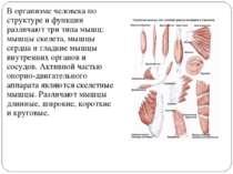 В организме человека по структуре и функции различают три типа мышц: мышцы ск...