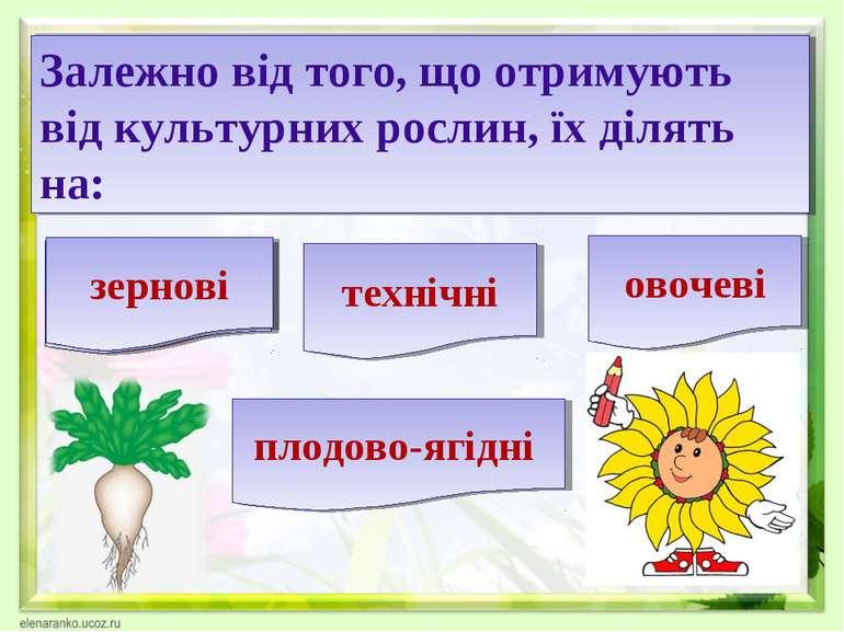 Залежно від того, що отримують від культурних рослин, їх ділять на: зернові т...