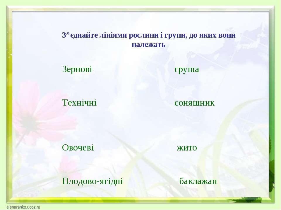 """З""""єднайте лініями рослини і групи, до яких вони належать Зернові груша Техніч..."""