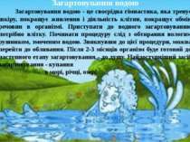 Загартовування водою Загартовування водою - це своєрідна гімнастика, яка трен...
