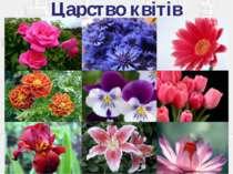 Царство квітів