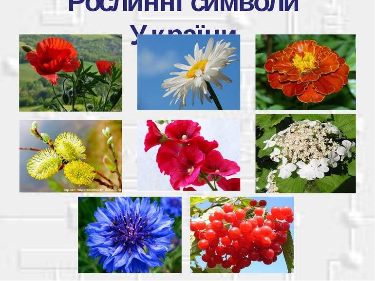 Рослинні символи України