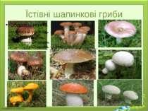 Їстівні шапинкові гриби