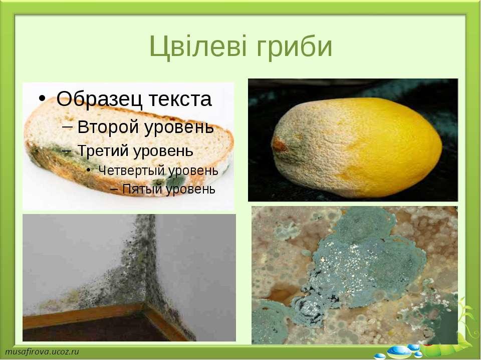 Цвілеві гриби