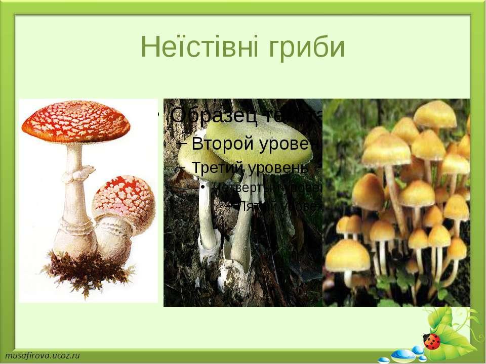 Неїстівні гриби