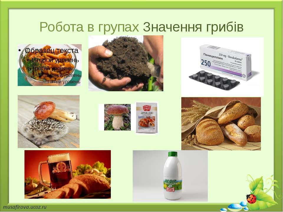 Робота в групах Значення грибів