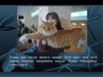 Кішка має гострі вигнуті пазурі. Щоб випустити кігті кішка повинна випрямити ...
