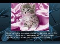 Кішка народжує дитинчат двічі на рік і приносить по 3-6 кошенят. Кошенята нар...