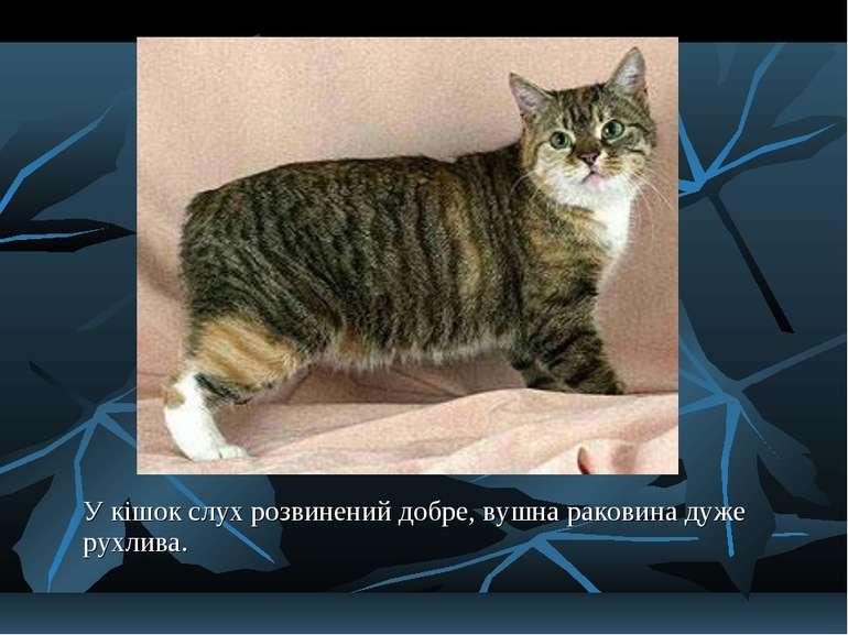 У кішок слух розвинений добре, вушна раковина дуже рухлива.