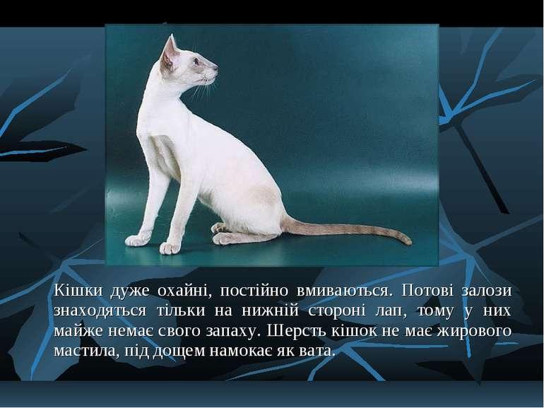 Кішки дуже охайні, постійно вмиваються. Потові залози знаходяться тільки на н...