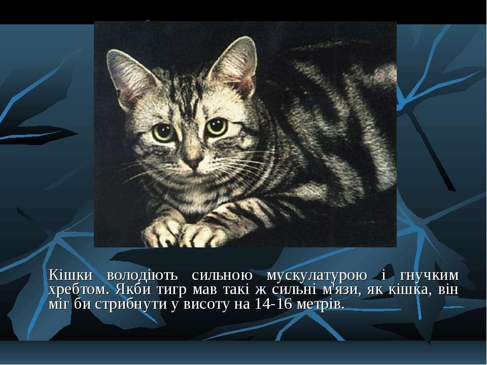 Кішки володіють сильною мускулатурою і гнучким хребтом. Якби тигр мав такі ж ...