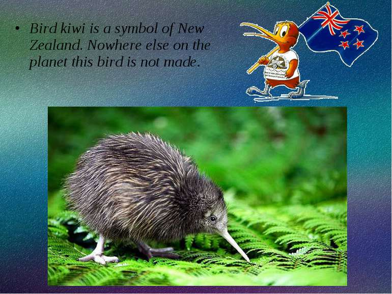 Bird kiwi is a symbol of New Zealand. Nowhere else on the planet this bird is...