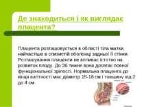Де знаходиться і як виглядає плацента? Плацента розташовується в області тіла...
