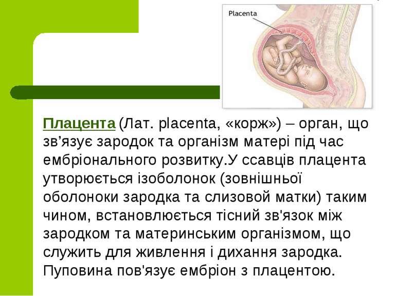 Плацента (Лат. placenta, «корж») – орган, що зв'язує зародок та органiзм мате...
