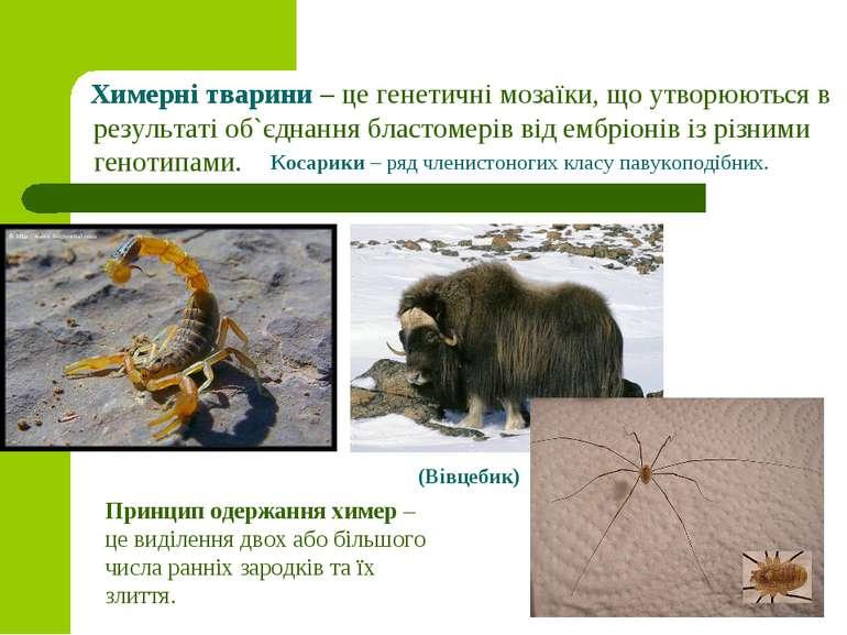 Химерні тварини – це генетичні мозаїки, що утворюються в результаті об`єднанн...