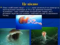 Це цікаво Одна з найбільших медуз - ціанея, може досягати 4 м в діаметрі та м...