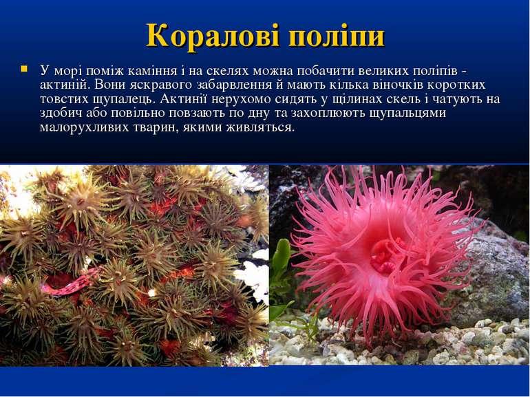 Коралові поліпи У морі поміж каміння і на скелях можна побачити великих поліп...