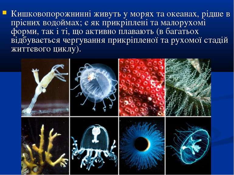 Кишковопорожнинні живуть у морях та океанах, рідше в прісних водоймах; є як п...