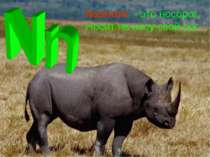 Nashorn - это носорог, Носит на носу свой рог.