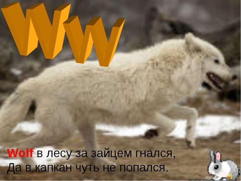 Wolf в лесу за зайцем гнался, Да в капкан чуть не попался.